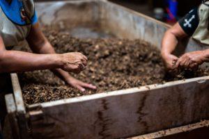 main dans le compost