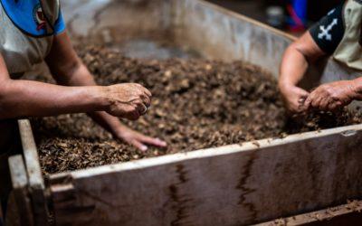 Le b.a.-ba du compost